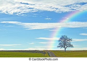 彩虹, 禿頭, 樹, 方式