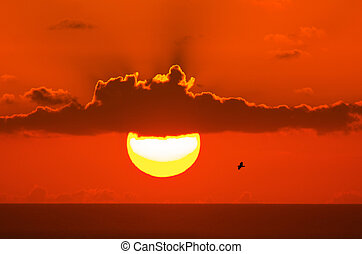 Seagull on sunset background - One Seagull fly above the...
