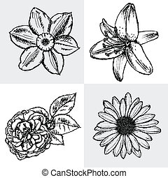 Lily, daisy and rose, narcissus flower sketch, vector...