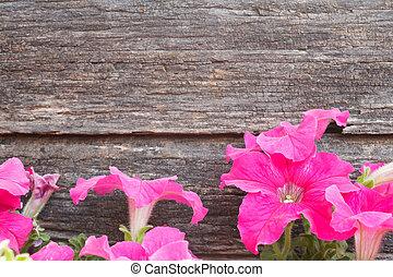 petunia flowers on wood background - purple petunia flowers...