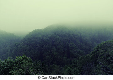 Foggy morning in the rain forest