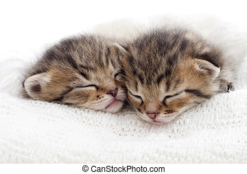 cute kittens sleeping