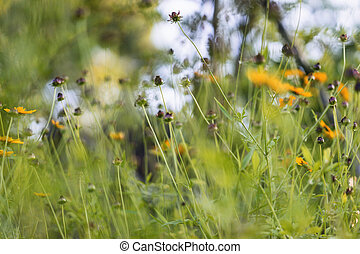 Nature Abstract of Black Eyed Susan Seed Pods - Abstract...