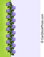 Periwinkle flowers line on green and blue background