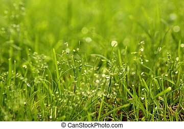 With water grass - A close-up of green grass with dew, full...