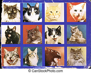 Collage, Katzen