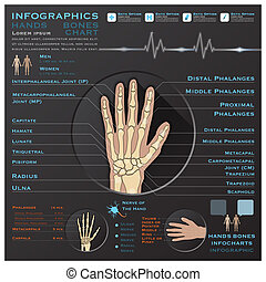 Hand Bone Skelatal System Infographic Infocharts Health And...
