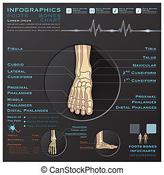 Foot Bone Skelatal System Infographic Infocharts Health And...