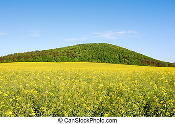 Yellow field of rapeseed with green hill and blue sky