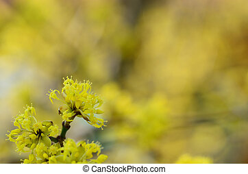 yellow flowers on shrub