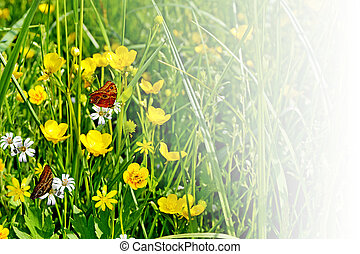 Wildflowers buttercups and butterflies