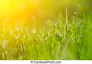 grass and beatiful bokeh - Green floral background with...