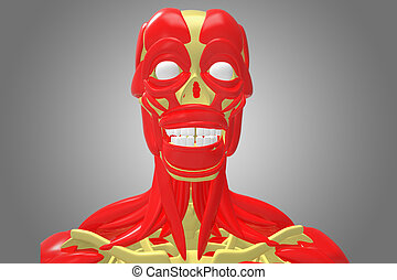 skeleton with face muscles - The human musculoskeletal...