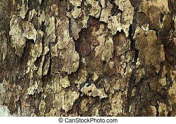 corteza, madera, textura
