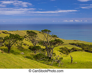 New Zealand landscape green hills with sea