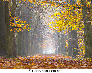 Yellow Foliage of Birch Trees during Autumn - Forest lane...