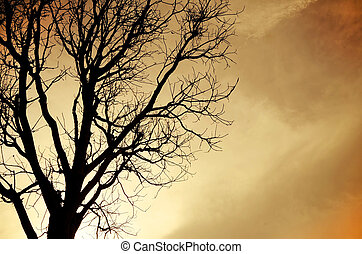 Silhouette of dead Tree without Leaves . Processed with...