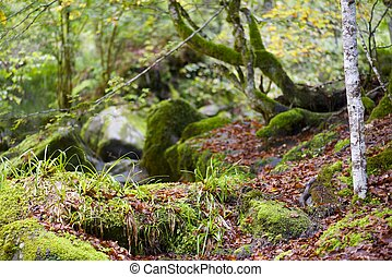 Pyrenees - Lush forest in Valley of Aspe, Pyrenees, France