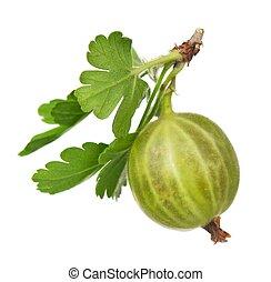 Green gooseberry - Ripe fresh gooseberries with leaves...