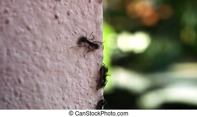 Macro ants moving on wall and background blurred bokeh