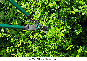 cut a hedge 05