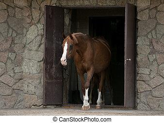 árabe, cavalo, vinda, saída, estável