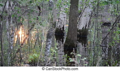 sun reflect water forest - detail of forest trees in flood...