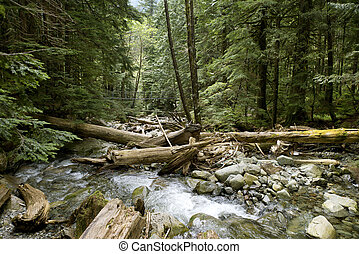 Foot bridge above Capilano River - River runs over boulders...