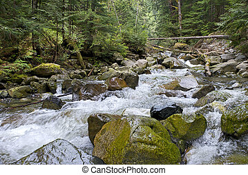 Capilano River in forest - River runs over boulders in...