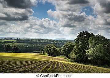 Landscape image of agricultural farm field with new planted crops in Summer