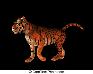 Tiger isolated on black. - A picture of a walking tiger...