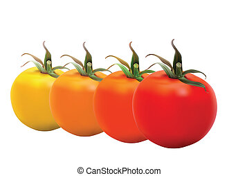 Tomatoes - Realistic Tomatoes in editable eps10 format The...