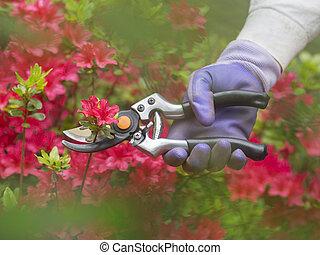 corte, flores