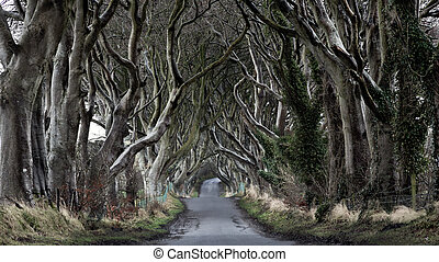 Dark Hedges - Woods of Dark Hedges with its strange shape...