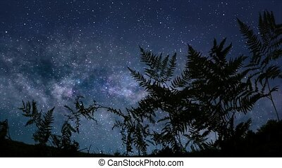 Calm starry night - Time lapse video of starry sky with...