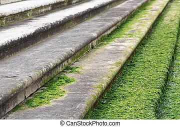 Algae on stairs in Venice