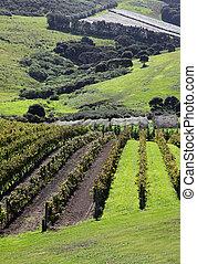 Waiheke Island Vineyard