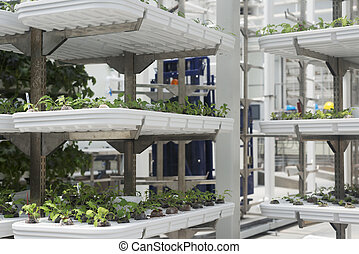 Hydroponics with plants in Florida.