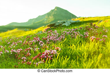Grass at Alpine meadow in Pyrenees