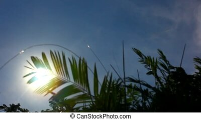 palm leaf moving in the wind in front of the sun on the sky background