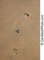 Dog Prints - Dog footprints in the sand -