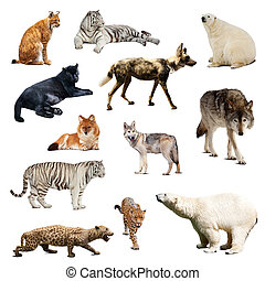 Set of predatory mammals Isolated over white with shadows