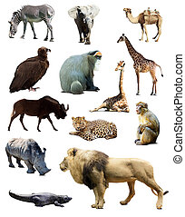 Set of african animals Isolated over white background