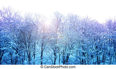 winter wonderland with blue and purple light