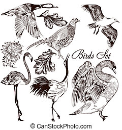 Collection of vector detailed hand drawn birds - Collection...