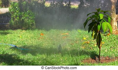 Water Sprinkler in garden 1920-1080