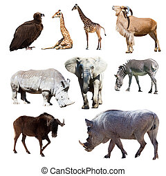 Warthog and few other African animals. Isolated over white