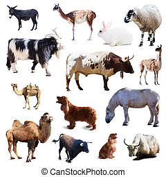 Set of farm animals Isolated with shade - Set of farm...