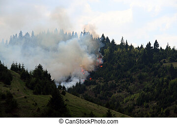 evergreen forest burning of summer drought destruction