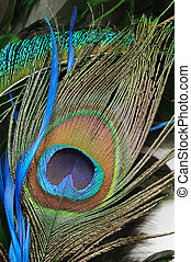 Peacock feather eye